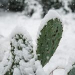 Winter Weatherizing for Your Home